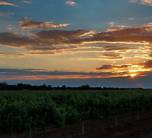 Vineyard by MarkCooperPhoto