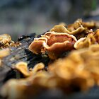 Fungi Ocean Grove by cmsdesign