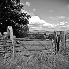 The Old Rickety Gate by christof1395