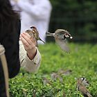 Finches Feeding From a Hand by Callie Smith