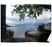 TREES WITH TOES, LAKE MC DONALD, GLACIER NATIONAL PARK Poster