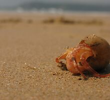Hermit Crab at Goa by Christian Wilson
