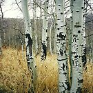 trees, Utah by steveschwarz
