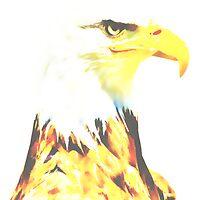 The Bald Eagle (Haliaeetus leucocephalus) by Terry Bailey