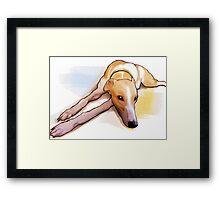 Bored grey hound Framed Print