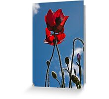Poppies In Late Afternoon Greeting Card