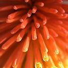 Red HOT Poker by Joy Watson