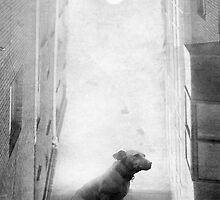 surreal 29 by Simon Siwak