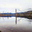 Lake Rowallan Reflections by Damon Colbeck