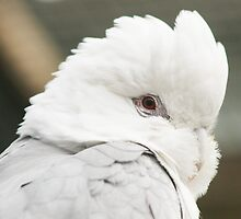 Galah by Jade Welch