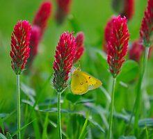 Sweet Nectar On Clove Flowers by Kristen O'Brian