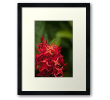 Every man's spice box seasons his own food Framed Print
