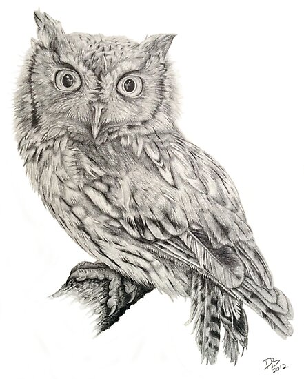 Eastern Screech Owl (Megascops asio), 2012, Pencil by Daniel Brown