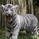 White Tiger Cub by Kuilz
