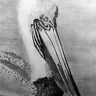 Pelican's best profile by Anne Thigpen