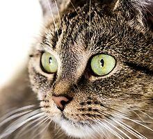 Cat portrait by Proobjektyva