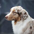 Dog by mrivserg