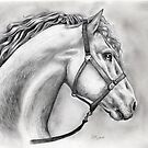 horse portrait  by deedeedee123