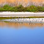 Birds At The River Bank by Diego  Re