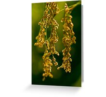Nature's Abstract 7 Greeting Card