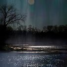 Moonlit Whispers by Robin Webster