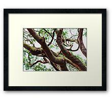 ~ entangled ~ Framed Print