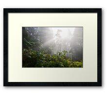 Forest with fog Framed Print