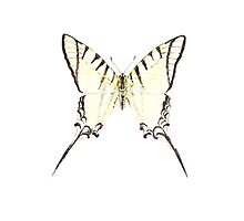 Papilio protesilaus by art-by-hughie