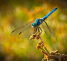 The Blue Dragonfly by Saija  Lehtonen