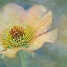 summer splendour by Teresa Pople