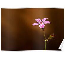 Little Girly Flower Poster