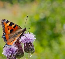Butterfly Bokeh by Margaret S Sweeny
