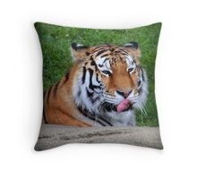Tiger Ponders His Next Snack Throw Pillow