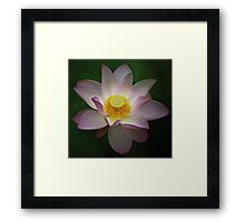 Bringing Light Framed Print