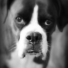 Arwen&#x27;s Portrait - Female Boxer by Evita