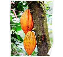 Cacao Tree © Poster