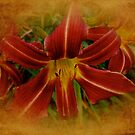 Heart of the Lily by MotherNature