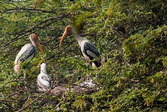 Storks around a nest by ashishagarwal74