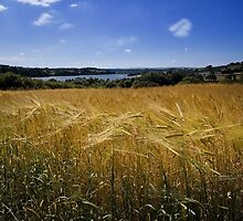 Field of Gold by Country  Pursuits