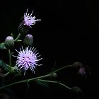 {{ moon thistle }} by melbell