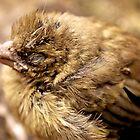 Petit oiseau by Wintermute69