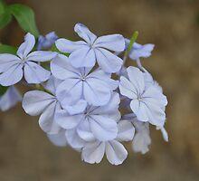 Spring Flowers by Ana  Eugénio