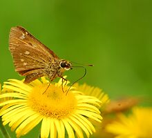 skipper by davvi