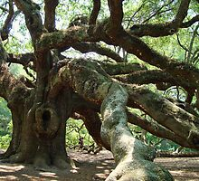 Angel Oak 2 by barnsis