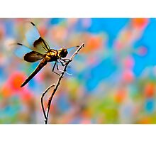Dragon Fly 'n Colored Sky Photographic Print