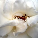 Satin White by Anivad - Davina Nicholas