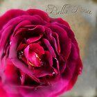 Bella Rosa by Jean Turner