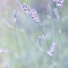Lavender Profusion by Rosie Nixon