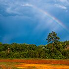 Rainbow by ctellis156