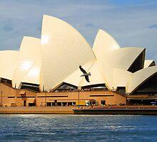 The Sydney opera house -a birds view by jozi1